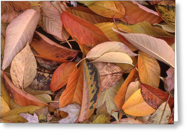 Falling Leaves On The Ground Greeting Card by Lyle Crump