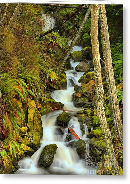 Falling Through Fens And Moss Greeting Card