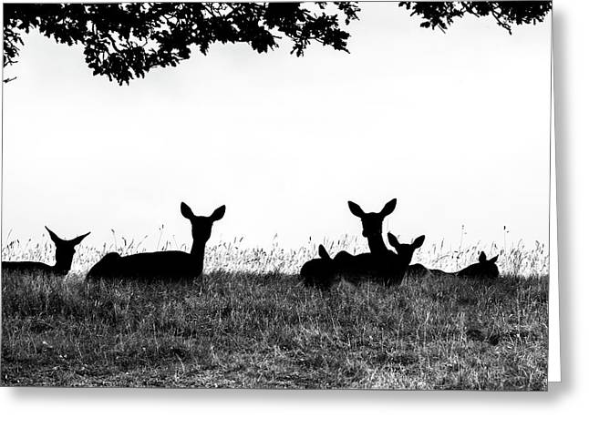fallow Deer Greeting Card by Yorkshire In Colour