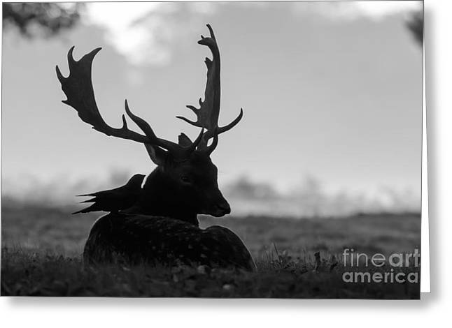 Fallow Deer With Friend - Black And White Greeting Card
