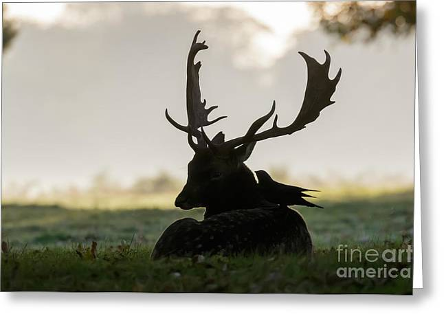 Fallow Deer With Friend Greeting Card
