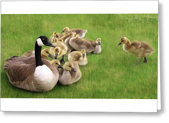Family Huddle - Canada Goose And Goslings Nature Painting Greeting Card by Rayanda Arts