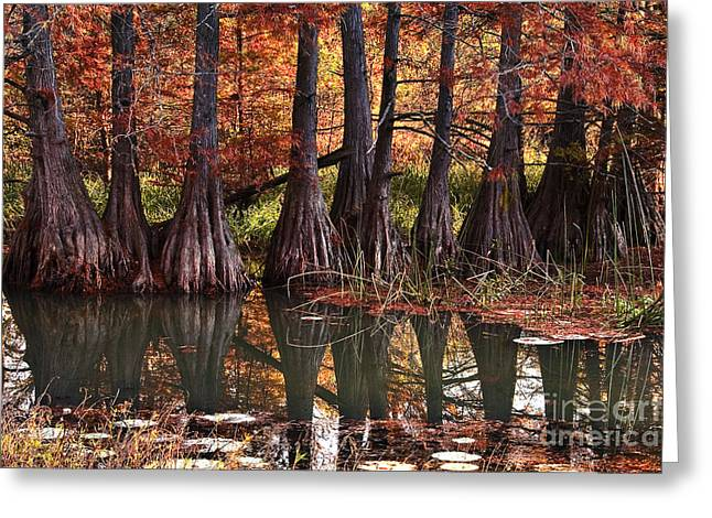 Greeting Card featuring the photograph Family Of Cypress At Lake Murray by Tamyra Ayles
