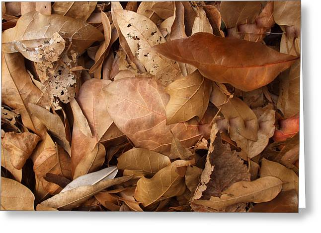 Family Of Leaves Greeting Card by Janet  Telander