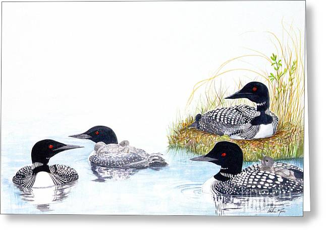Family Of Loons Greeting Card by Pauline Ross