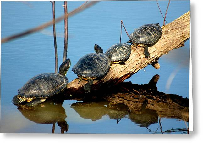 Family Of Turtles Greeting Card by Bob Guthridge