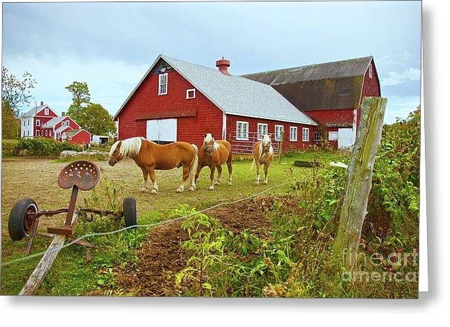 Family On The Farm Greeting Card