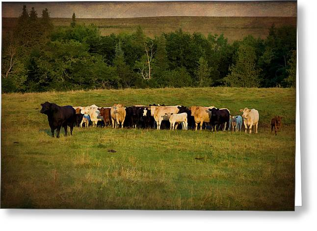 Family Portrait Greeting Card by Gary Smith