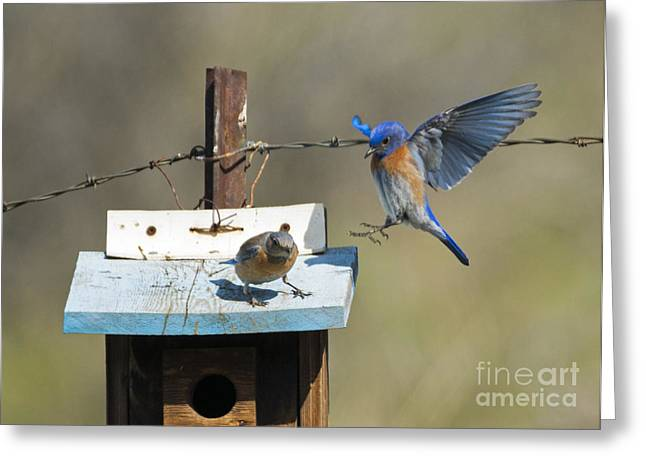 Family Time Greeting Card by Mike Dawson