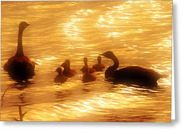 Family Time Greeting Card by Toni Hopper
