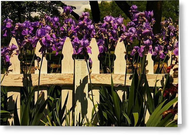 Fence Overgrown With Irises Greeting Card by Jeff Swan