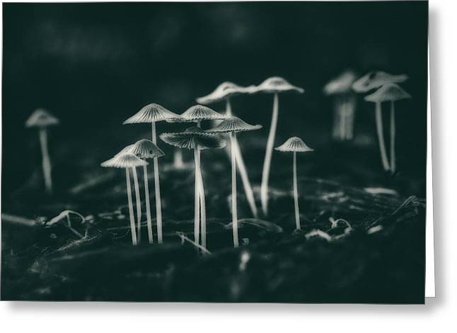 Fanciful Fungus Greeting Card