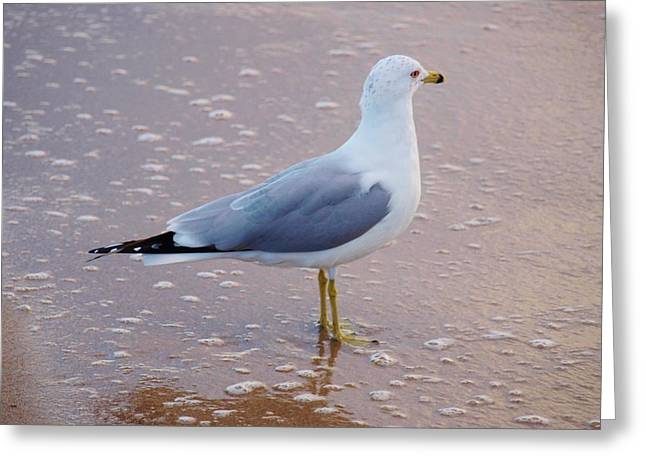 Fancy Gull Greeting Card by E Luiza Picciano