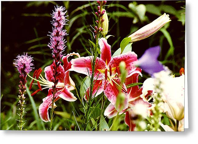 Fancy Lilies In Garden Greeting Card