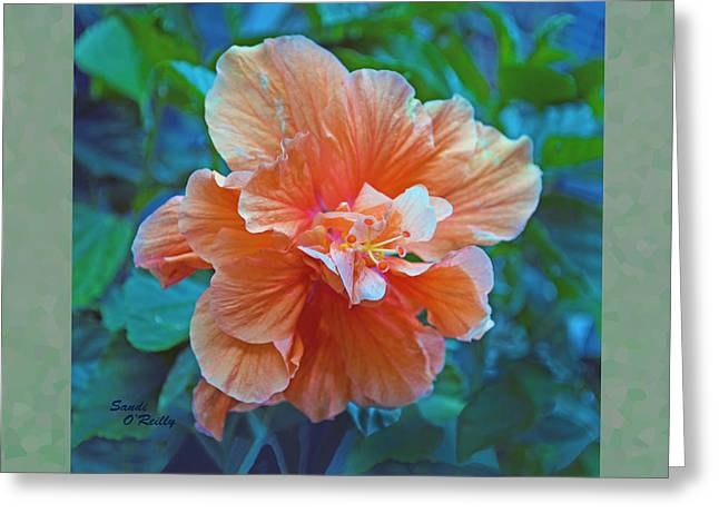 Fancy Peach Hibiscus Greeting Card by Sandi OReilly