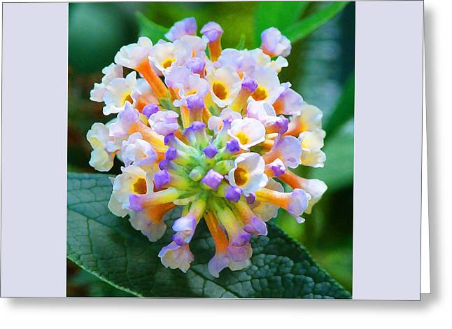 Fantasy Floral Bouquet Greeting Card