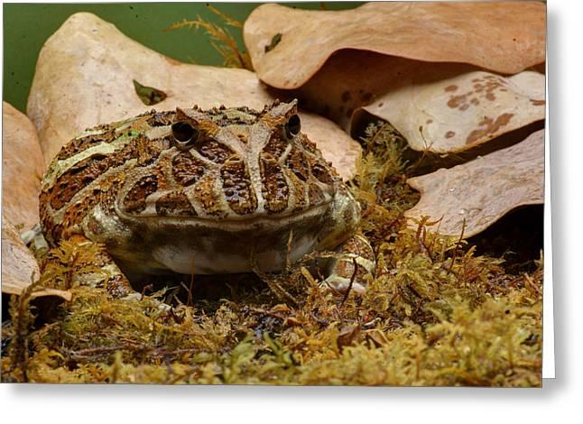 Fantasy - Horned Frog Greeting Card by Nikolyn McDonald