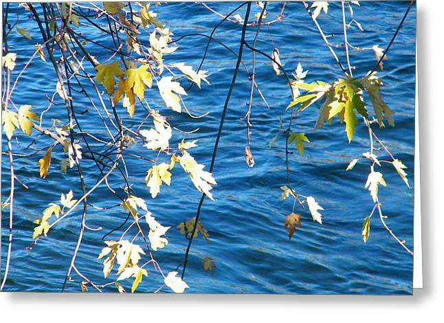 Farewell Autumn      Indiana Greeting Card by Rory Cubel