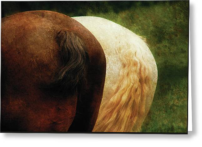 Farm - Horse - Tails You Win Greeting Card