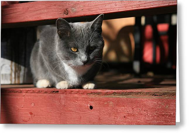 Red Eye Greeting Cards - Farm cat Greeting Card by Tacey Hawkins