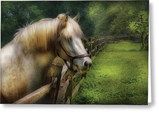Farm - Horse - White Stallion Greeting Card by Mike Savad
