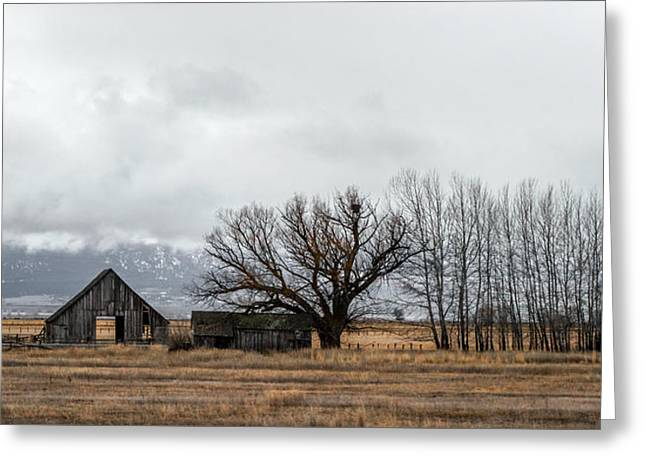 Farm Life Greeting Card by Ron Day