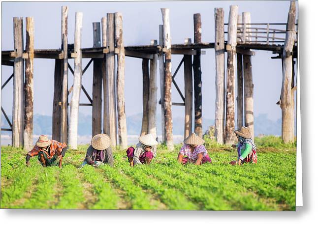 farmers at work around U-Bein Bridge Greeting Card