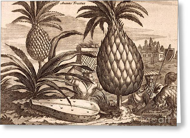 Farming Large Pineapples Greeting Card