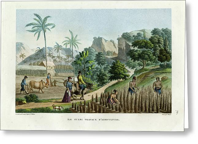 Greeting Card featuring the drawing Farming On Guam Island by d apres Pellion