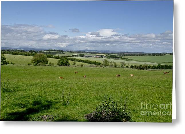 Farmland In Beecraigs. Greeting Card