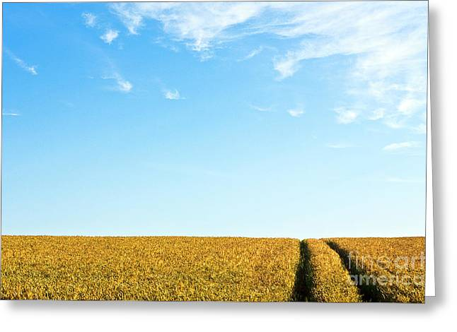 Farmland To The Horizon 1 Greeting Card by Heiko Koehrer-Wagner