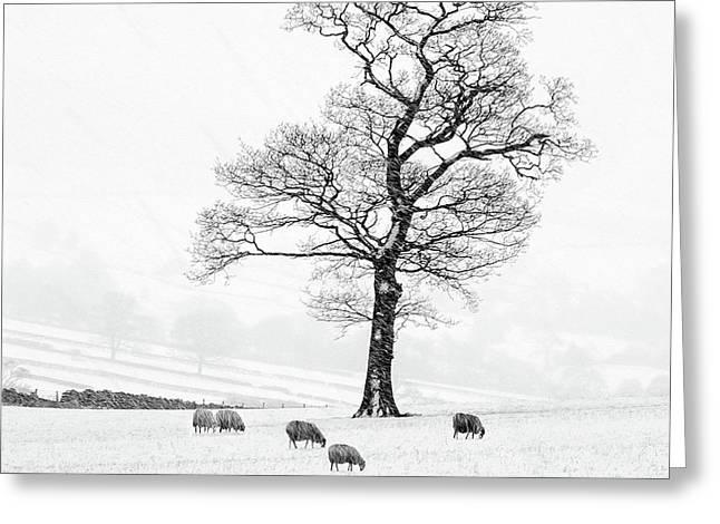 Farndale Winter Greeting Card by Janet Burdon
