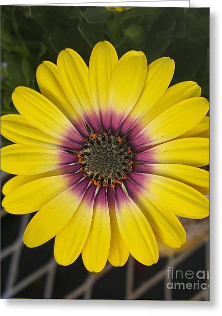 Fascinating Yellow Flower Greeting Card by Jasna Gopic