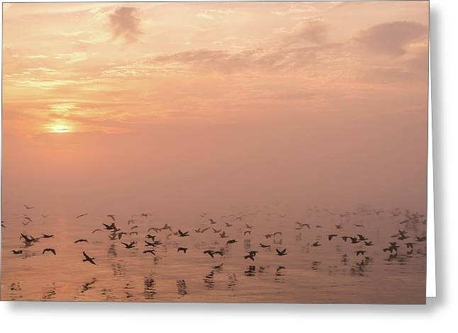 Fast Flight In Soft Pink Mist Greeting Card