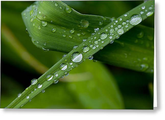 Fat Raindrops Greeting Card by Robert Ullmann