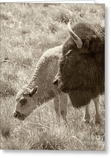 Greeting Card featuring the photograph Father And Baby Buffalo by Rebecca Margraf