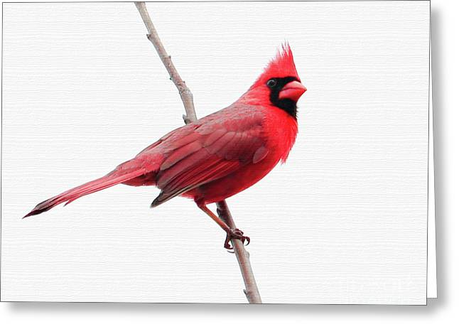 Father's Day Cardinal Greeting Card