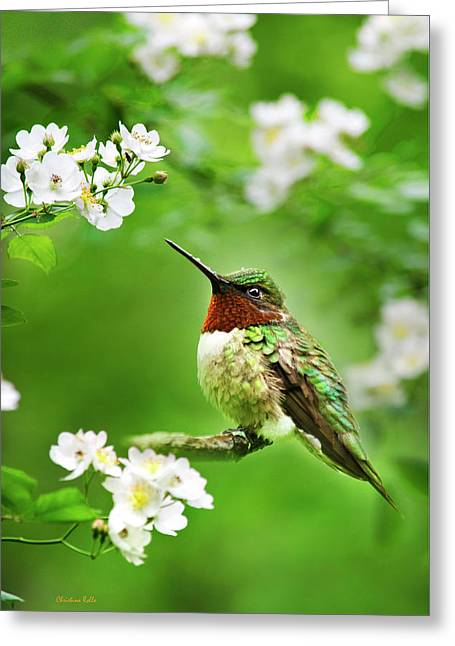 Fauna And Flora - Hummingbird With Flowers Greeting Card by Christina Rollo