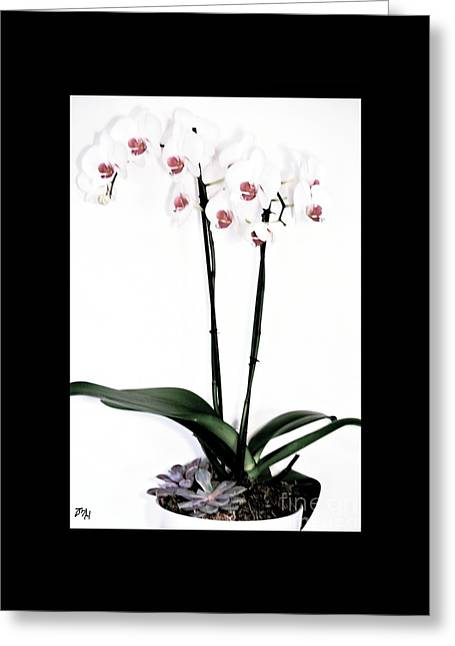 Favorite Gift Of Orchids Greeting Card by Marsha Heiken