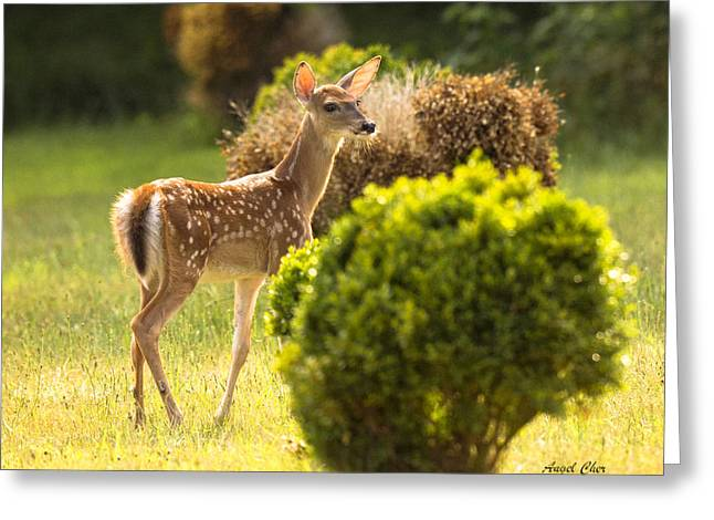 Greeting Card featuring the photograph Fawn by Angel Cher
