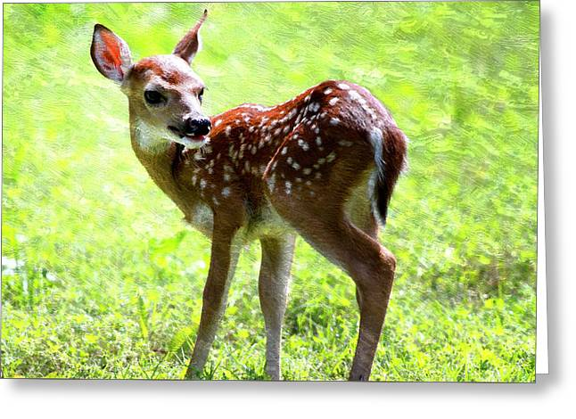 Fawn Deer In Field Oil Painting Greeting Card by Design Turnpike