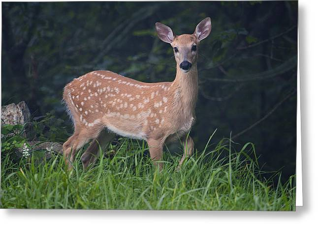 Greeting Card featuring the photograph Fawn Doe by Ken Barrett