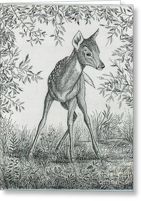 Fawn In Clearing Greeting Card by Samuel Showman