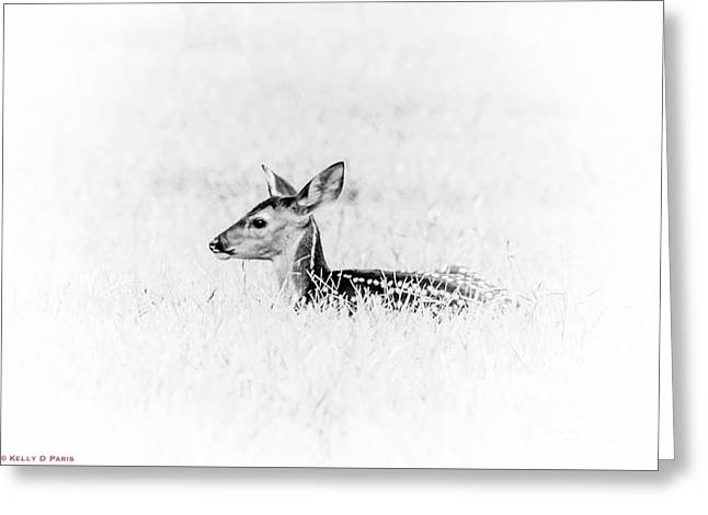 Fawn In The Grass Greeting Card by Kelly Paris