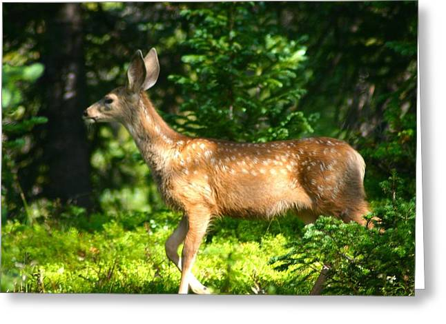 Fawn In Woods Greeting Card
