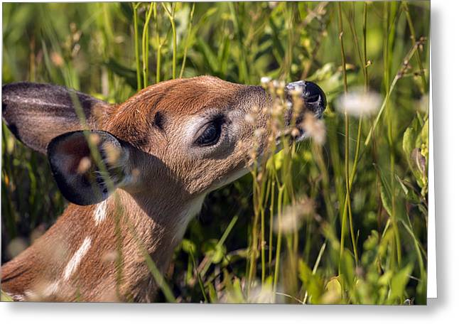 Fawn Smelling The Wildflowers Greeting Card