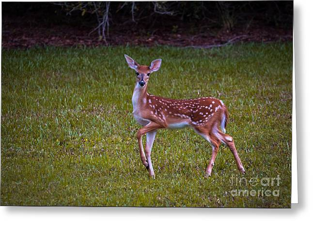 Fawn Greeting Card by Zina Stromberg