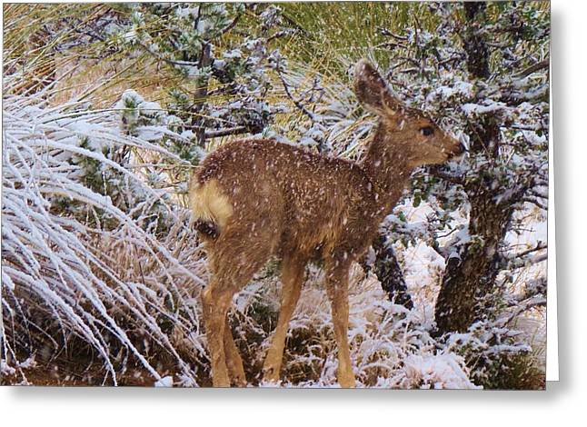 Fawn's First Snow Greeting Card by Feva Fotos