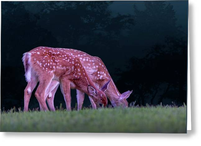 Fawns Under The Moon Greeting Card