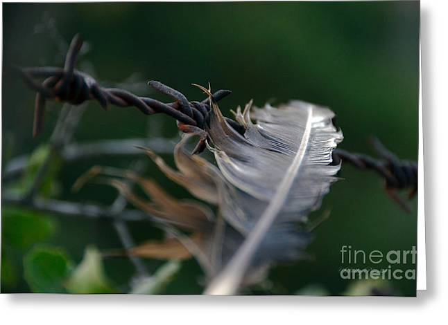 Feather And Barbed Wire Greeting Card